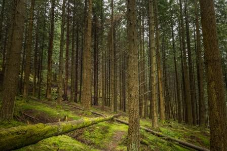 Tall Timber - Trossachs National Park, Scotland