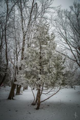 Winter Hoarfrost in Minnesota