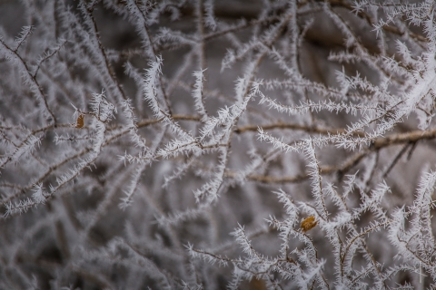 Winter Hoarfrost in Minnesota