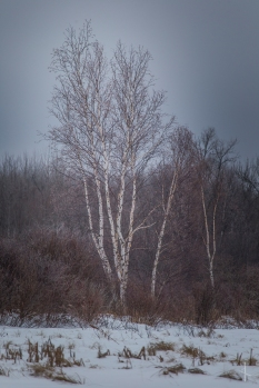 Windigo Creek - Minnesota