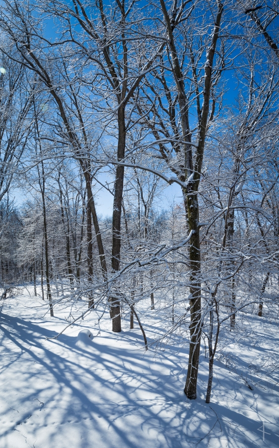 Late Winter - Waseca, MN