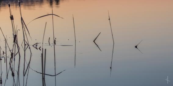 Wild Rice - Minnesota